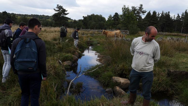 Prairie humide, moules perlières et vaches Aubrac : à la découverte du ruisseau de Sinières sur une parcelle de M. Remise, agriculteur (au premier plan)